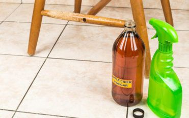 Useful tips to remove the odor of cat urine
