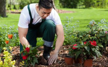 Here's what you need to know if you plan to grow flowers in your garden