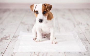 Keep out the odor, not your pet!