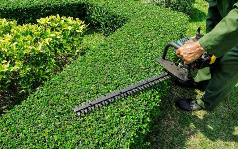 The best weed trimmers to beautify your garden