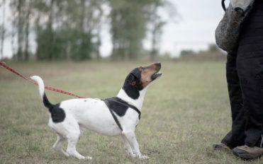 Top eight dog training tips
