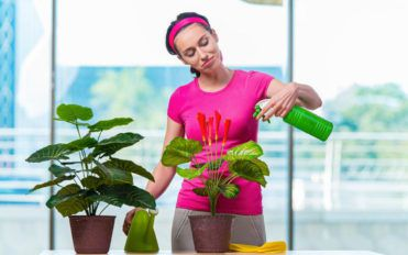Why you should have houseplants in your home