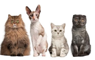 Four cat breeds you must consider bringing home