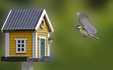 What you need to know about birdhouses